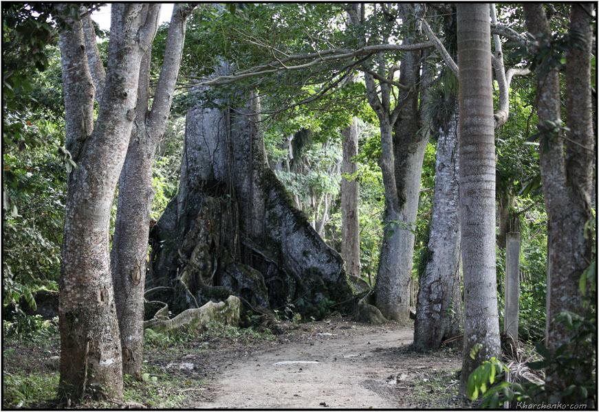 Великое Дерево. Первая встреча.